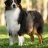 Shepherd Kross - CHASE - WIND SPIRIT DIAMOND CROWNED PRINCE